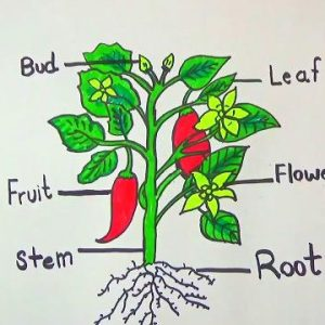 "H Λάθος ""Καλλιέργεια"""