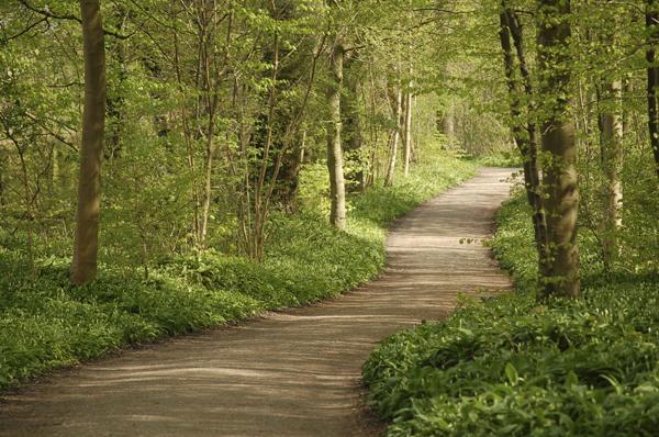 Η Επαφή με τη Φύση Μπορεί να Θεραπεύσει την Ψυχή και το Μυαλό μας