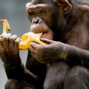 Ολόκληρος… «ζωολογικός κήπος» εντοπίστηκε στο τελωνείο: 29.720 ρολόγια & 180.600 αναπτήρες «μαϊμούδες»