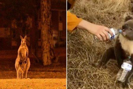 Στην Αυστραλία, η ανάσα του πλανήτη μυρίζει θάνατο
