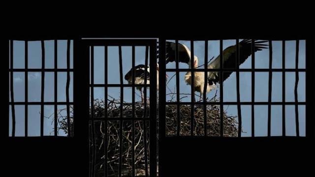 Γιατί μας έκλεισαν Φυλακή στα σπίτια μας ? Κορωνοϊός.