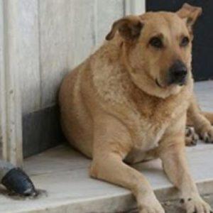 Αστυνομικοί έσωσαν σκύλο που μετανάστες προόριζαν για φαγητό
