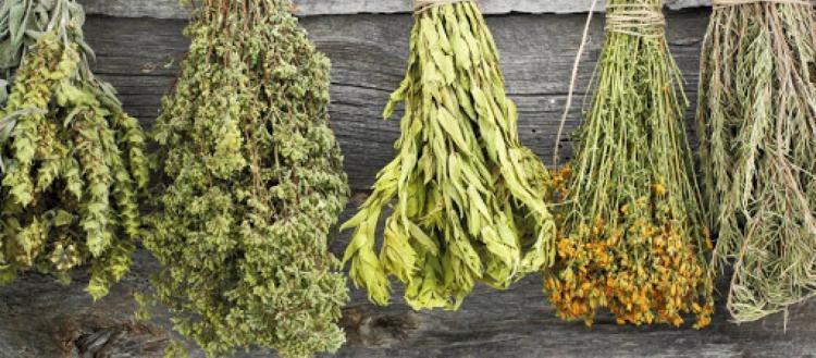 Θαυματουργό: Αυτό είναι το βότανο που ρίχνει την πίεση σε 15 λεπτά!