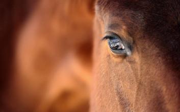 Πυροβόλησαν με κυνηγετικό όπλο 3 άλογα σε κτήμα στα Γιάννενα
