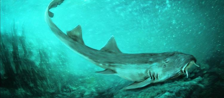 Δύτες εντόπισαν τα δόντια του μεγαλύτερου προϊστορικού καρχαρία μέσα σε υποβρύχιο σπήλαιο (βίντεο)