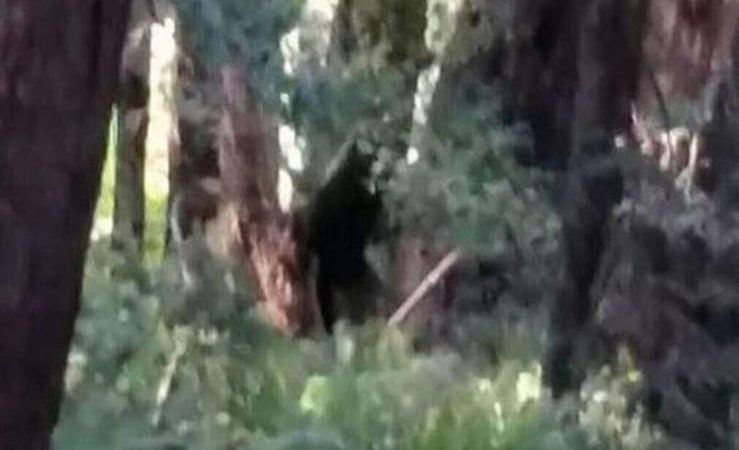«Είναι αληθινό»; Κατέγραψαν «μυθικό» πλάσμα σε δάσος να σκοτώνει ζώα (ΦΩΤΟ)