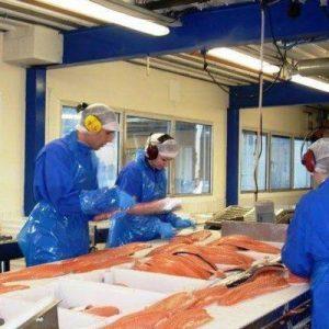 Σολομός ιχθυοτροφείου: Ίσως η πιο τοξική τροφή στον πλανήτη