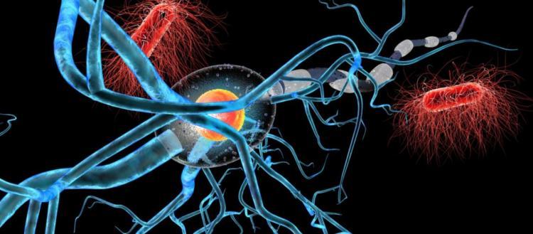 Bρέθηκε η θεραπεία όλων των καρκίνων; – «Ανακαλύφθηκε τυχαία» – Θα δοκιμαστεί εντός το 2020 – Τι λένε οι επιστήμονες