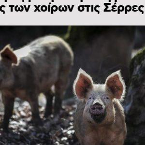 Rick : «..Θα Μολύνουν Τα Οικόσιτα Ζώα Μας (Γαλοπούλες Χοίροι Κλπ.)»
