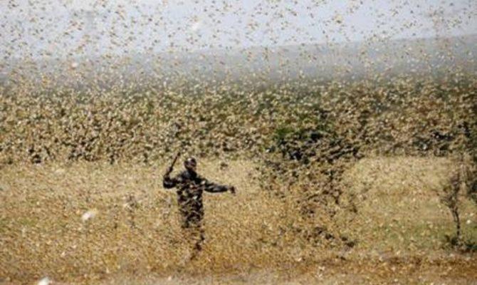 Εκατομμύρια ακρίδες «σκέπασαν» τον ουρανό: Έντρομοι οι κάτοικοι τράπηκαν σε φυγή