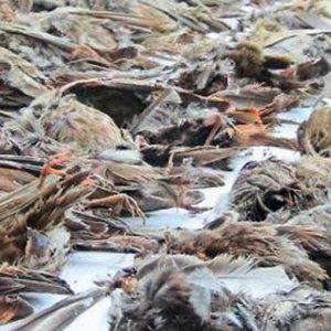 Η πόλη τέθηκε υπό απαγόρευση μετά το θάνατο των κοράκων από γρίπη των πτηνών στην Ινδία ενώ χιλιάδες άλλα πουλιά πέφτουν μυστηριωδώς από τον ουρανό νεκρά στη Σρι Λάνκα.